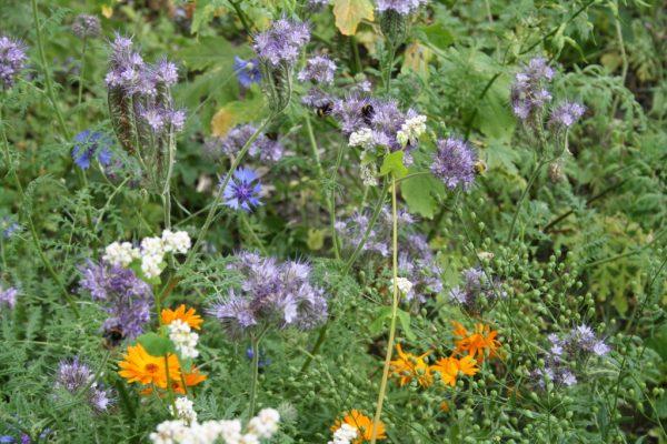 Gemeinde fördert Entstehung von Blühflächen