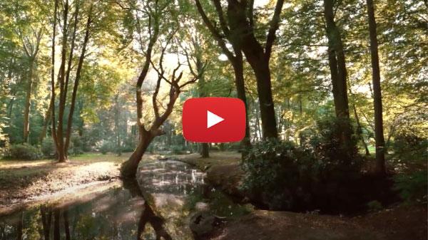 Video Vorschaubild Schlosspark